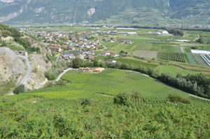 Vignoble de la Sarvaz (Saillon)