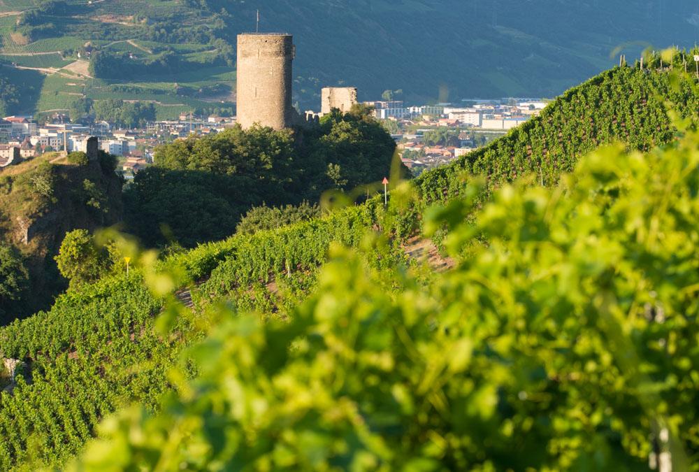 Vignoble de Saillon